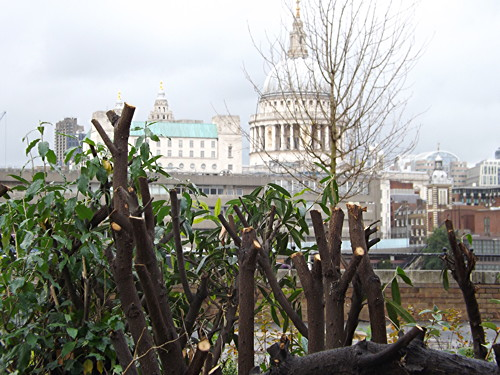 Bankside shrubs: residents question drastic pruning of 'wildlife haven'
