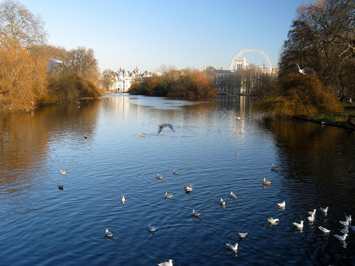 View from the bridge in St James's Park
