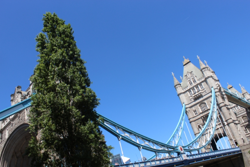 Tower Bridge poplar: council issues tree protection order