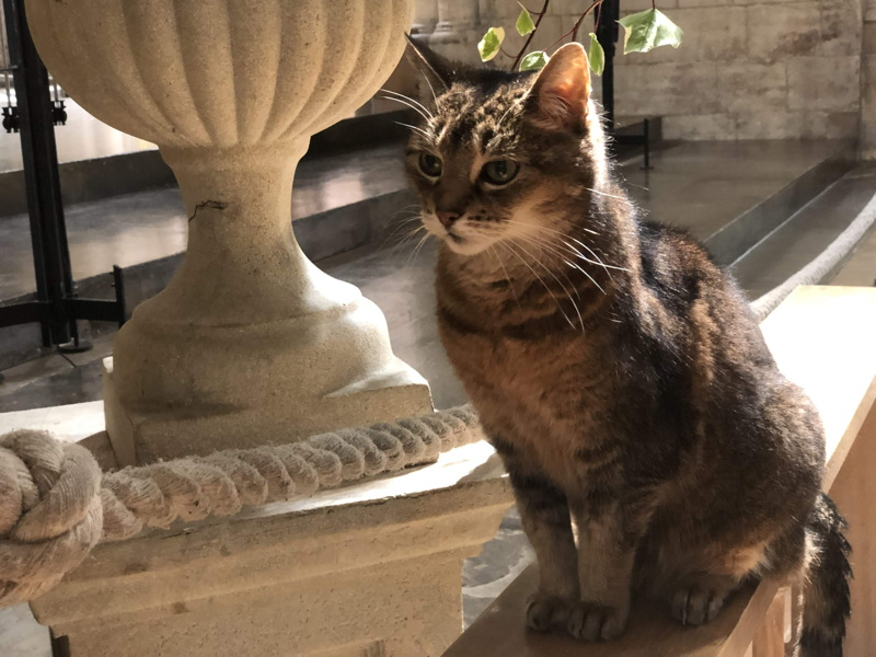Doorkins the cathedral cat retires after a decade delighting visitors