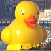 Tower Bridge raised for giant yellow duck